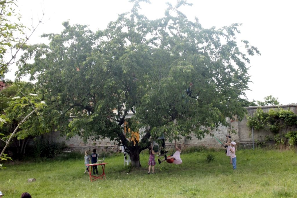 Baumeln am Kirschbaum